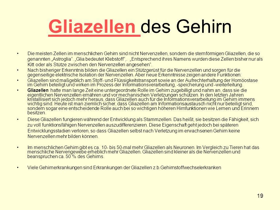 Gliazellen des Gehirn
