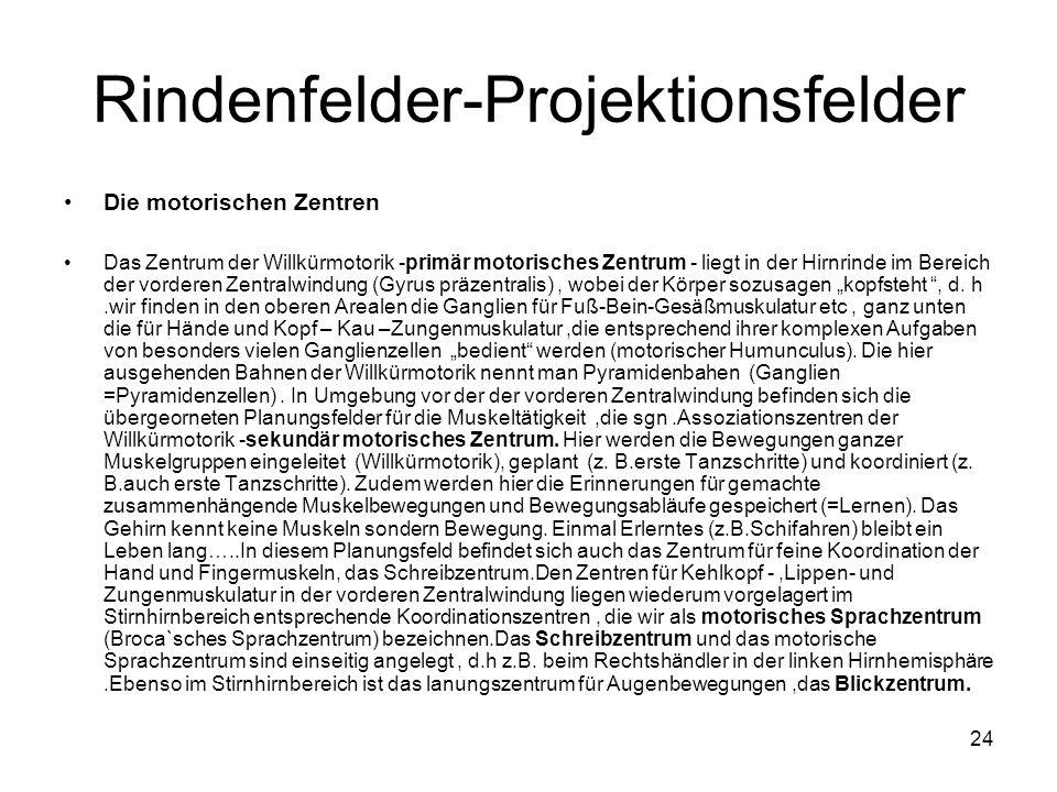 Rindenfelder-Projektionsfelder