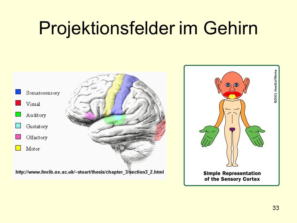 Projektionsfelder im Gehirn