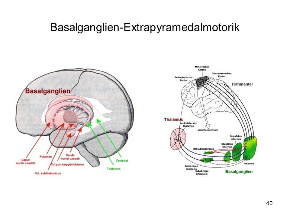 Basalganglien-Extrapyramedalmotorik