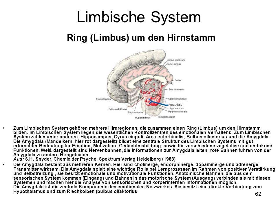 Limbische System Ring (Limbus) um den Hirnstamm