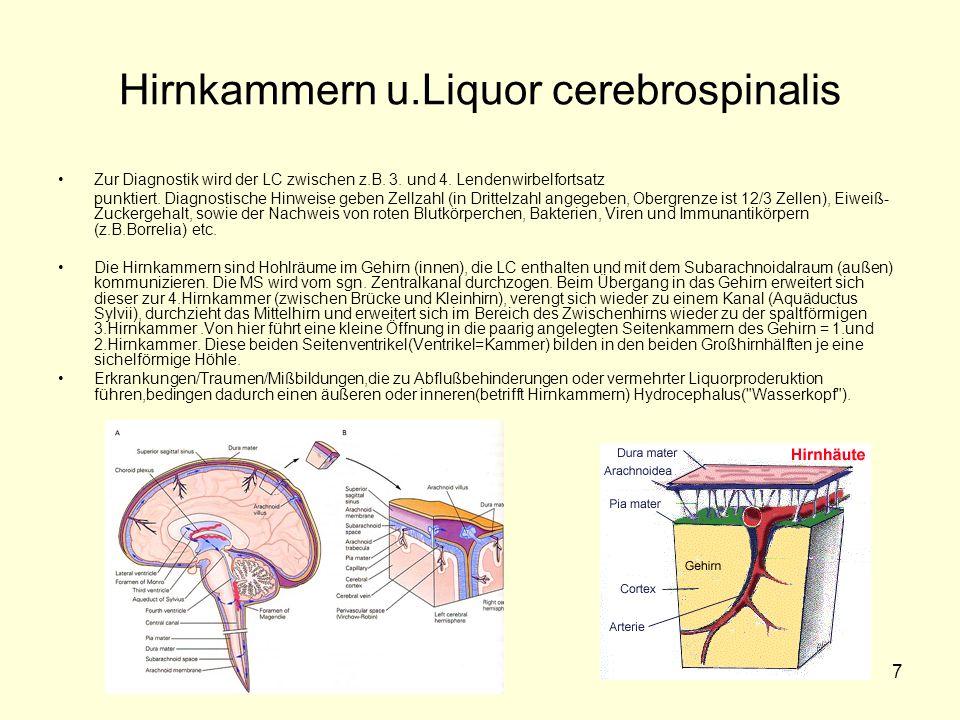 Hirnkammern u.Liquor cerebrospinalis