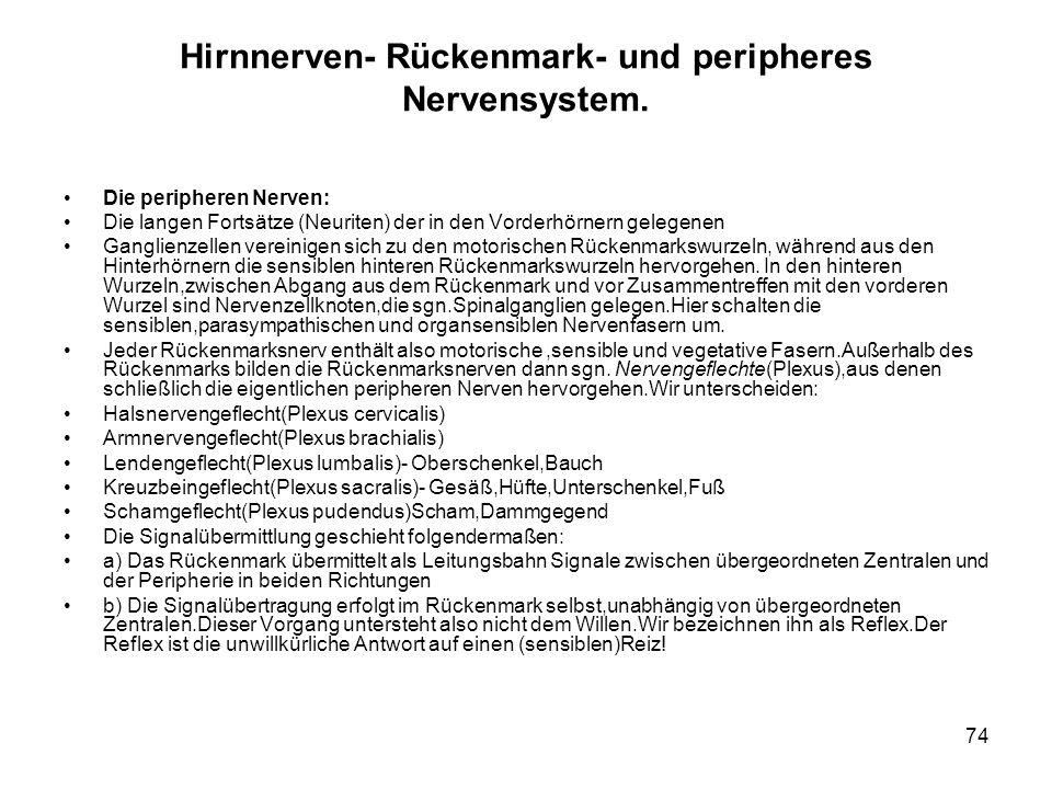 Hirnnerven- Rückenmark- und peripheres Nervensystem.