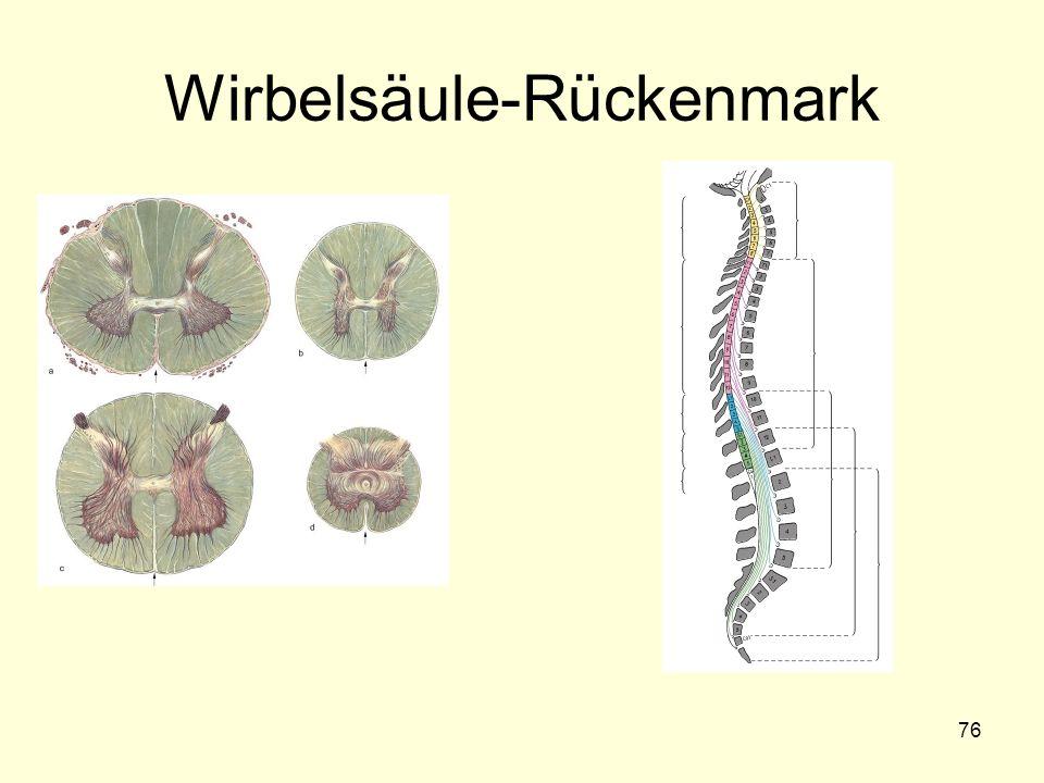 Wirbelsäule-Rückenmark