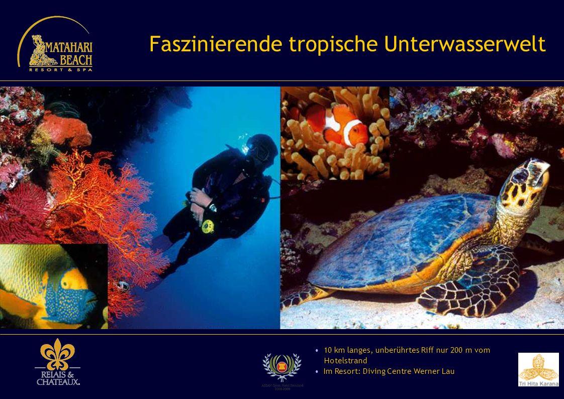 Faszinierende tropische Unterwasserwelt