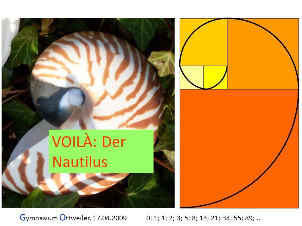 VOILÀ: Der Nautilus