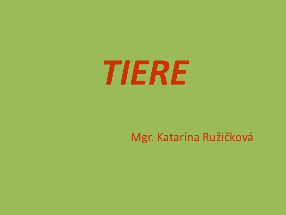 Mgr. Katarína Ružičková