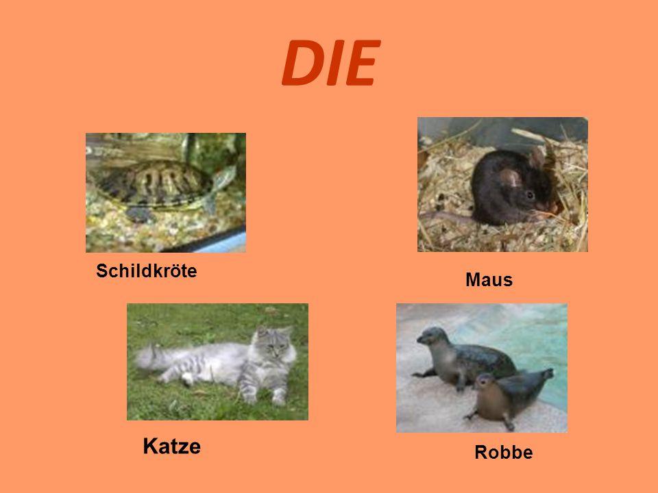 DIE Schildkröte Maus Katze Robbe