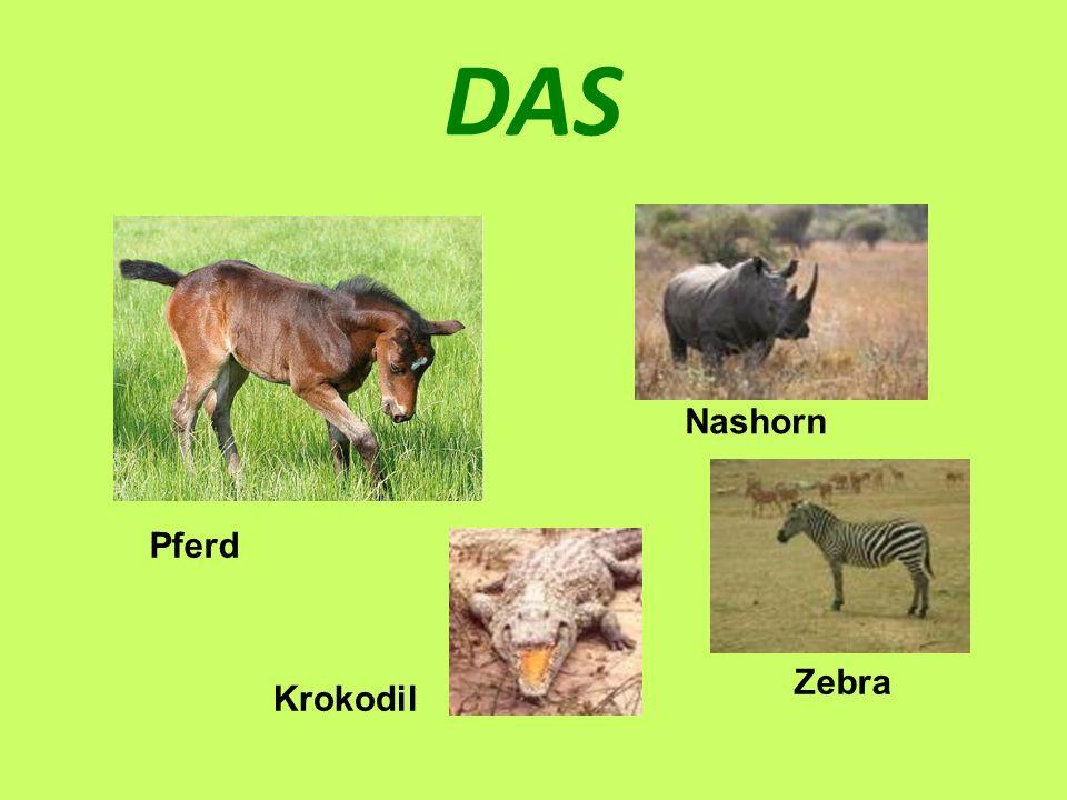DAS Nashorn Pferd Zebra Krokodil
