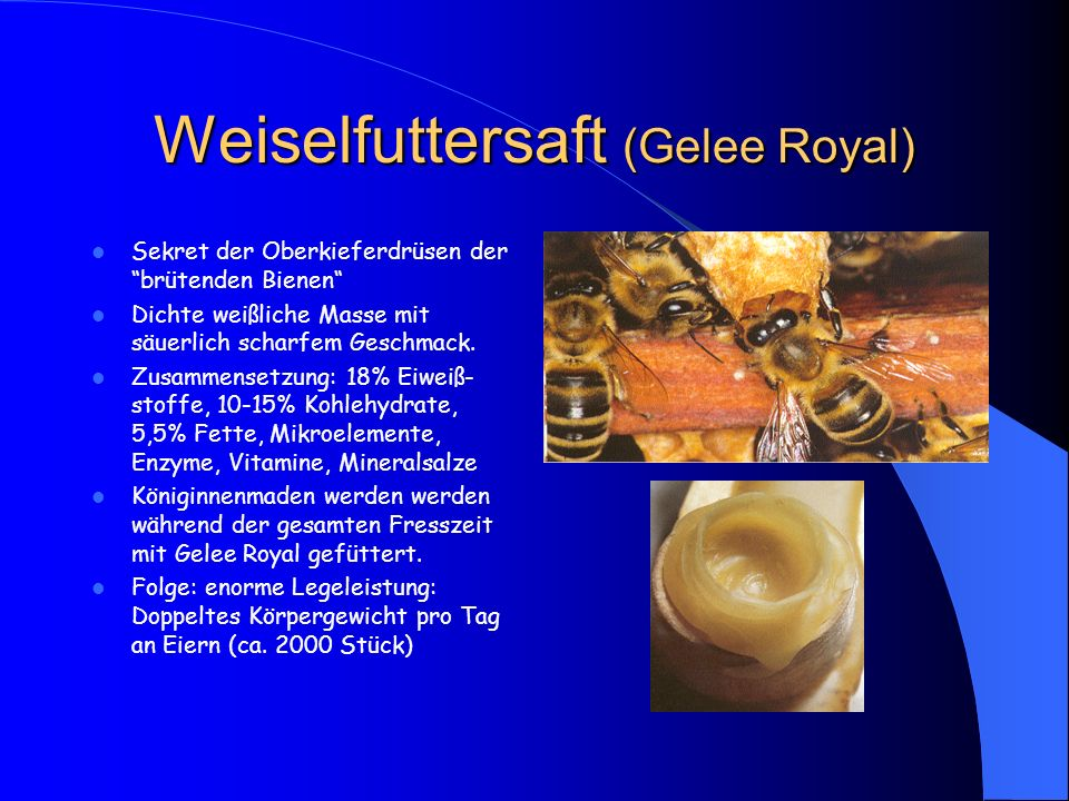 Weiselfuttersaft (Gelee Royal)