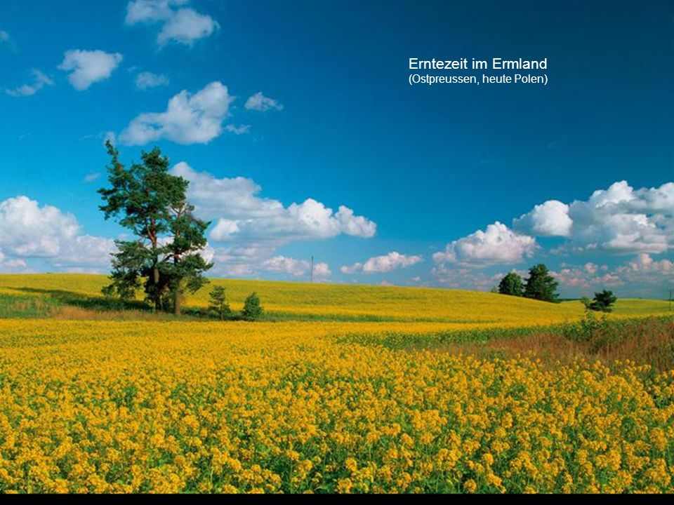 Erntezeit im Ermland (Ostpreussen, heute Polen)