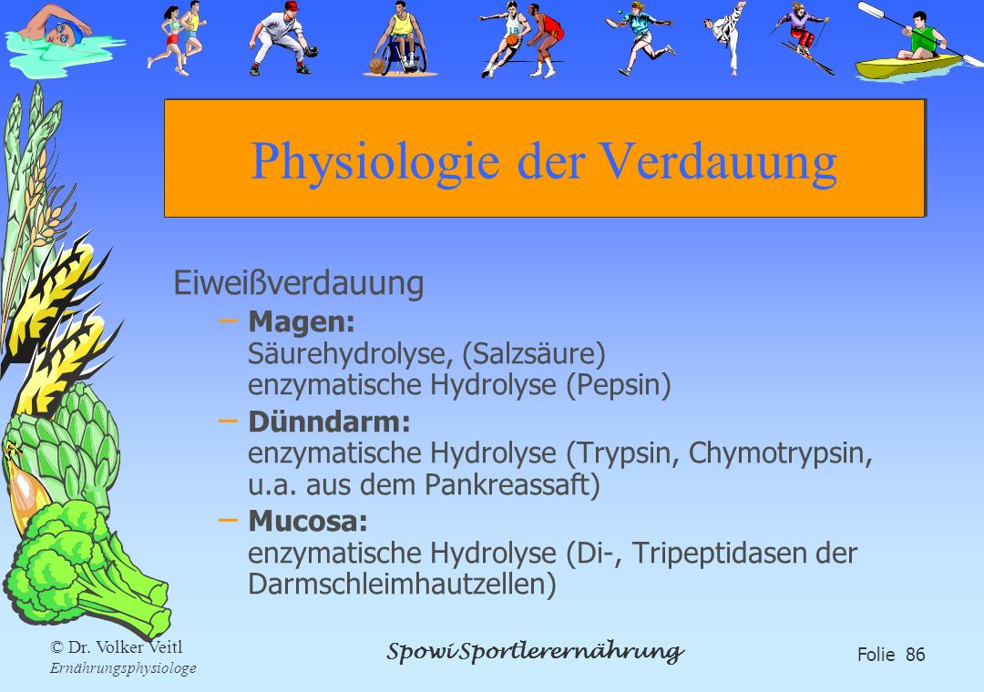 Physiologie der Verdauung