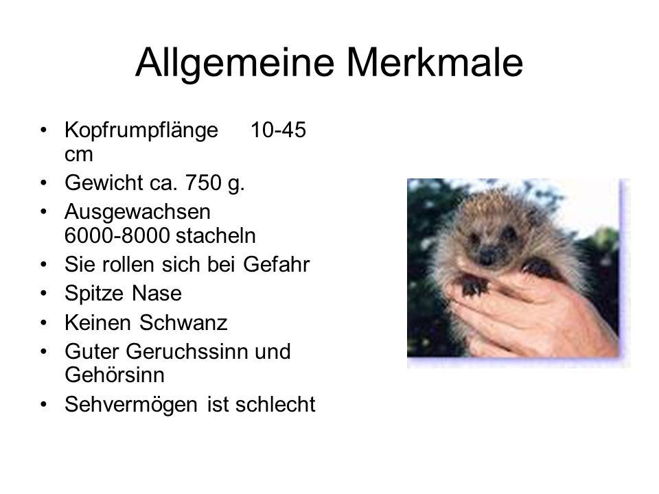 Allgemeine Merkmale Kopfrumpflänge 10-45 cm Gewicht ca. 750 g.