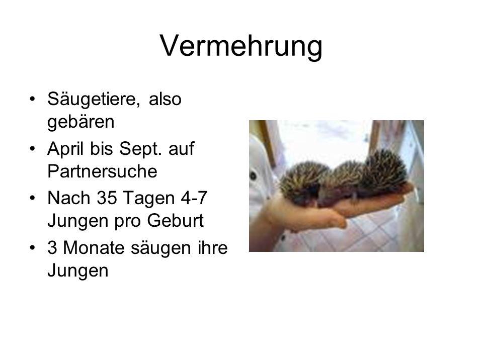 Vermehrung Säugetiere, also gebären April bis Sept. auf Partnersuche