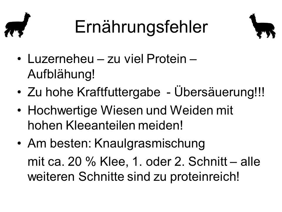 Ernährungsfehler Luzerneheu – zu viel Protein – Aufblähung!