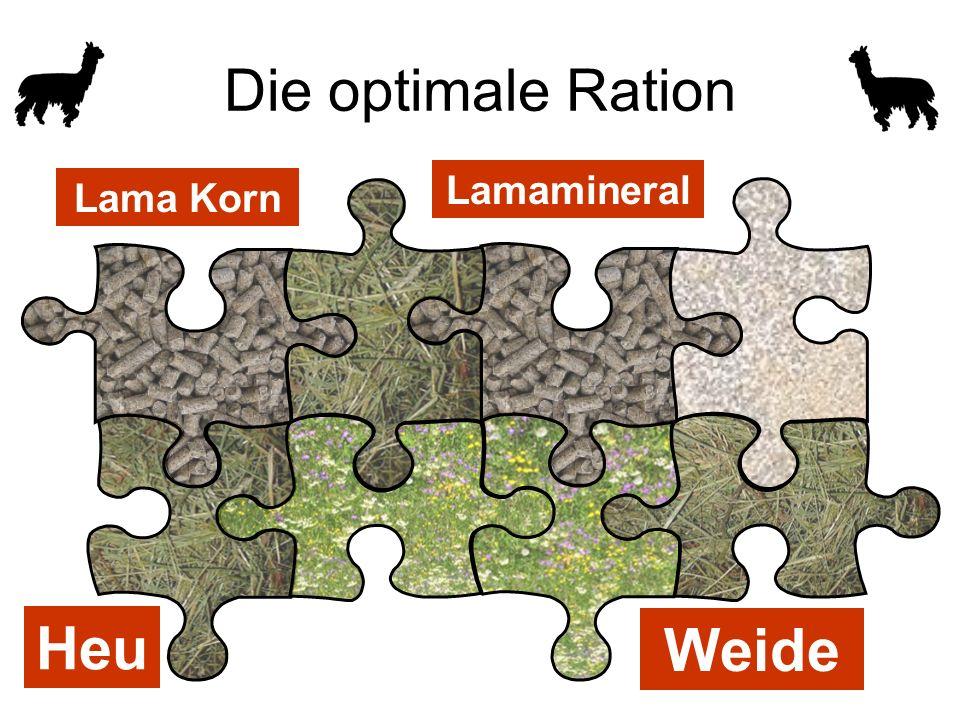 Die optimale Ration Lamamineral Lama Korn Heu Weide