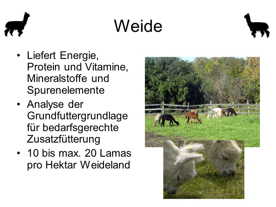 Weide Liefert Energie, Protein und Vitamine, Mineralstoffe und Spurenelemente. Analyse der Grundfuttergrundlage für bedarfsgerechte Zusatzfütterung.