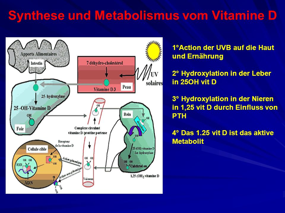 Synthese und Metabolismus vom Vitamine D