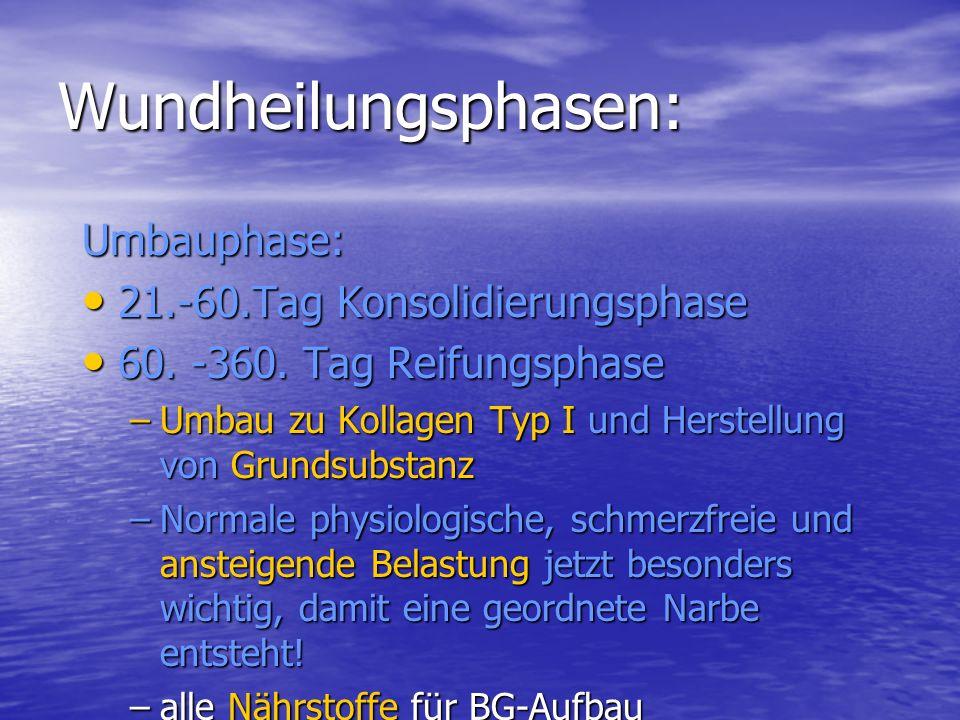 Wundheilungsphasen: Umbauphase: 21.-60.Tag Konsolidierungsphase