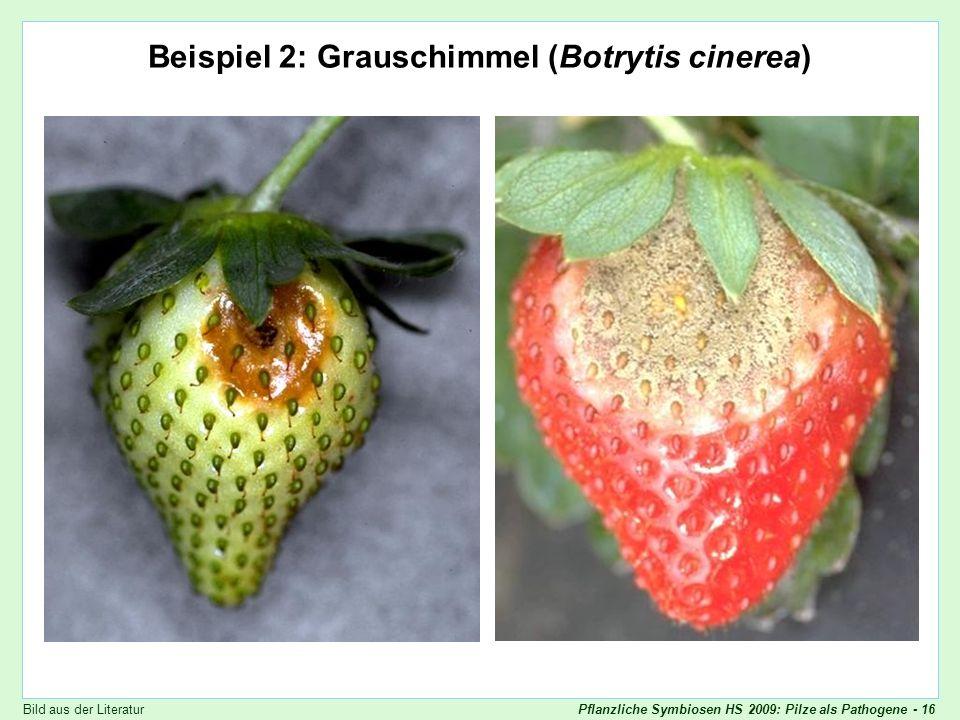 Beispiel 2: Grauschimmel (Botrytis cinerea)