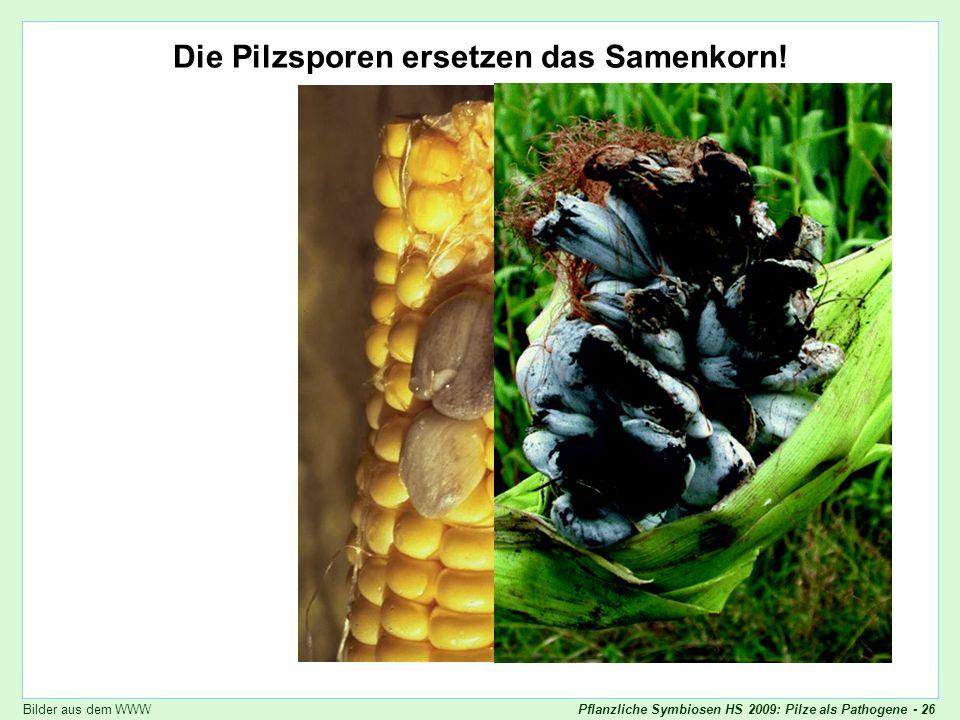 Die Pilzsporen ersetzen das Samenkorn!