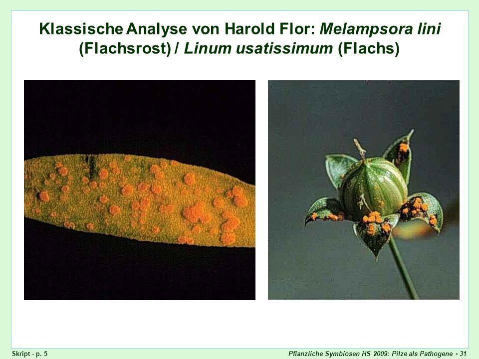 Klassische Analyse von Flor: Melampsora lini