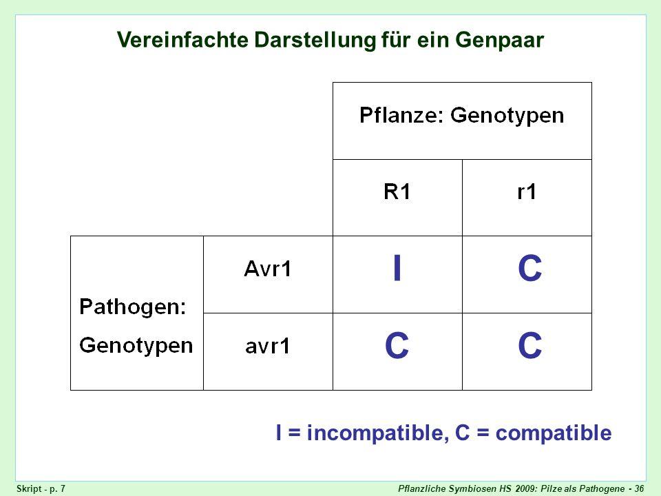 Vereinfachte Darstellung: ein Genpaar
