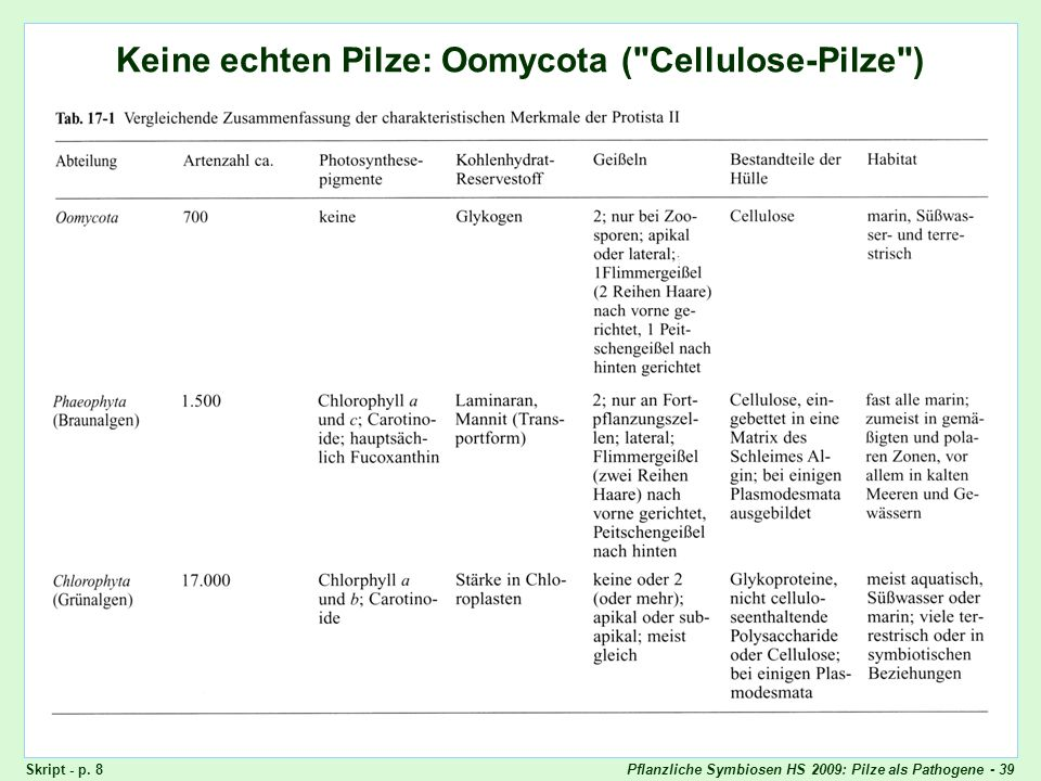 Keine echten Pilze: Oomycota ( Cellulose-Pilze )