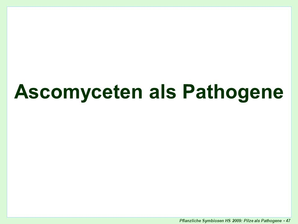 Ascomyceten als Pathogene