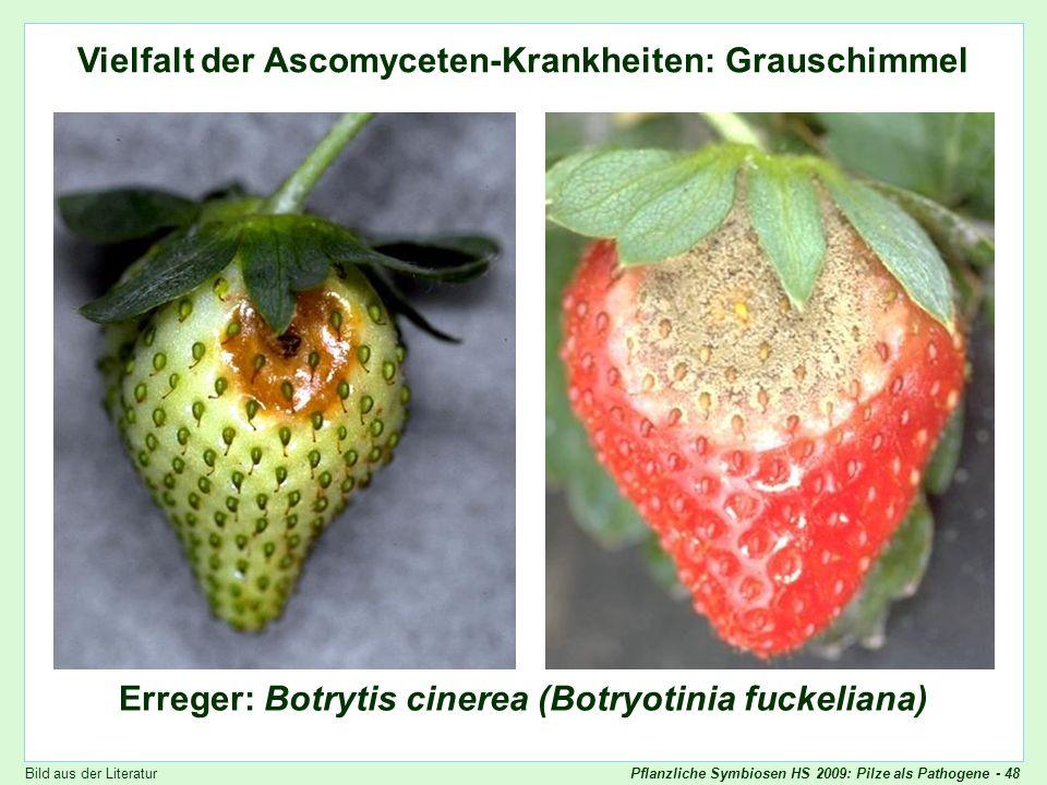 Vielfalt der Ascomyceten-Krankheiten: Grauschimmel
