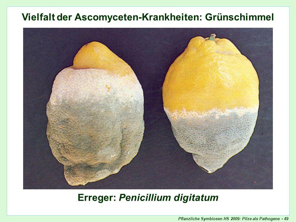 Vielfalt der Ascomyceten-Krankheiten: Grünschimmel