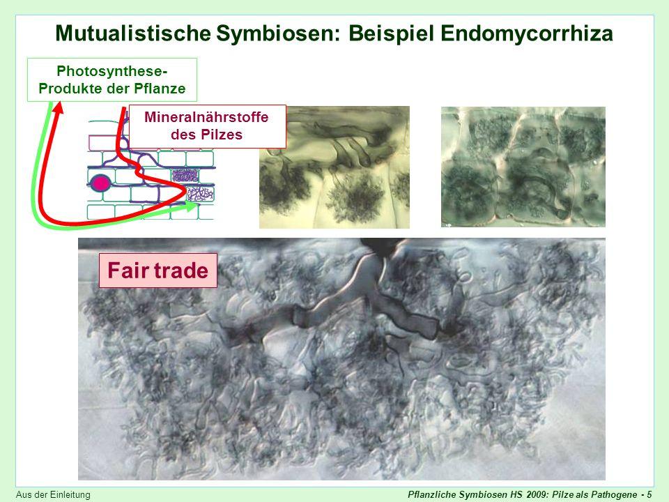 Mutualistische Symbiosen: Beispiel Endomycorrhiza