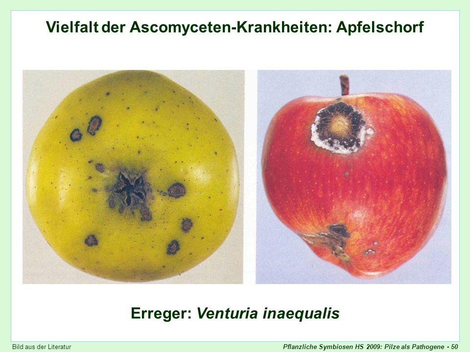 Vielfalt der Ascomyceten-Krankheiten: Venturia (1)