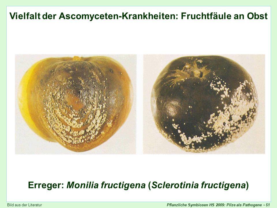 Vielfalt der Ascomyceten-Krankheiten: Monilia (2)