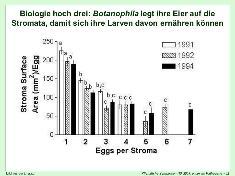 Botanophila Eiablage Biologie hoch drei: Botanophila legt ihre Eier auf die Stromata, damit sich ihre Larven davon ernähren können.