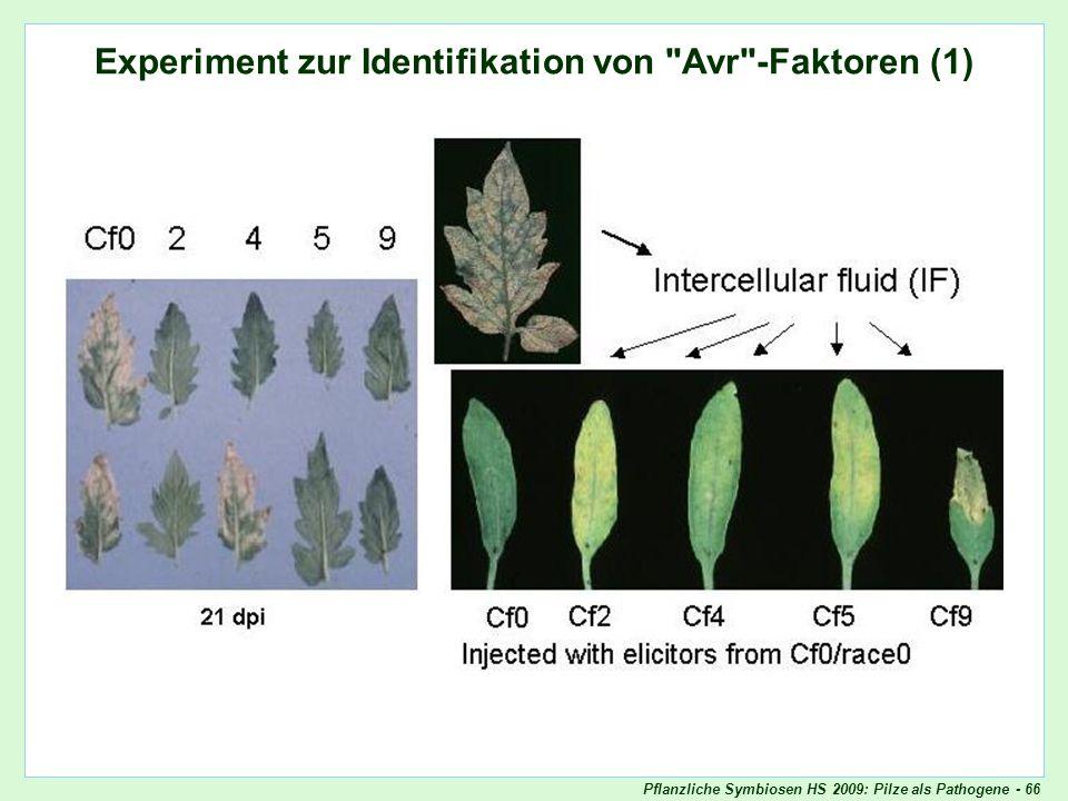 Experiment zur Identifikation von Avr-Faktoren (1)