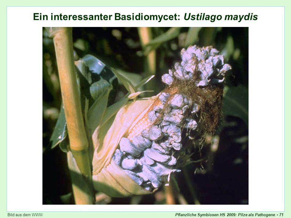 Ustilago maydis: Übersicht