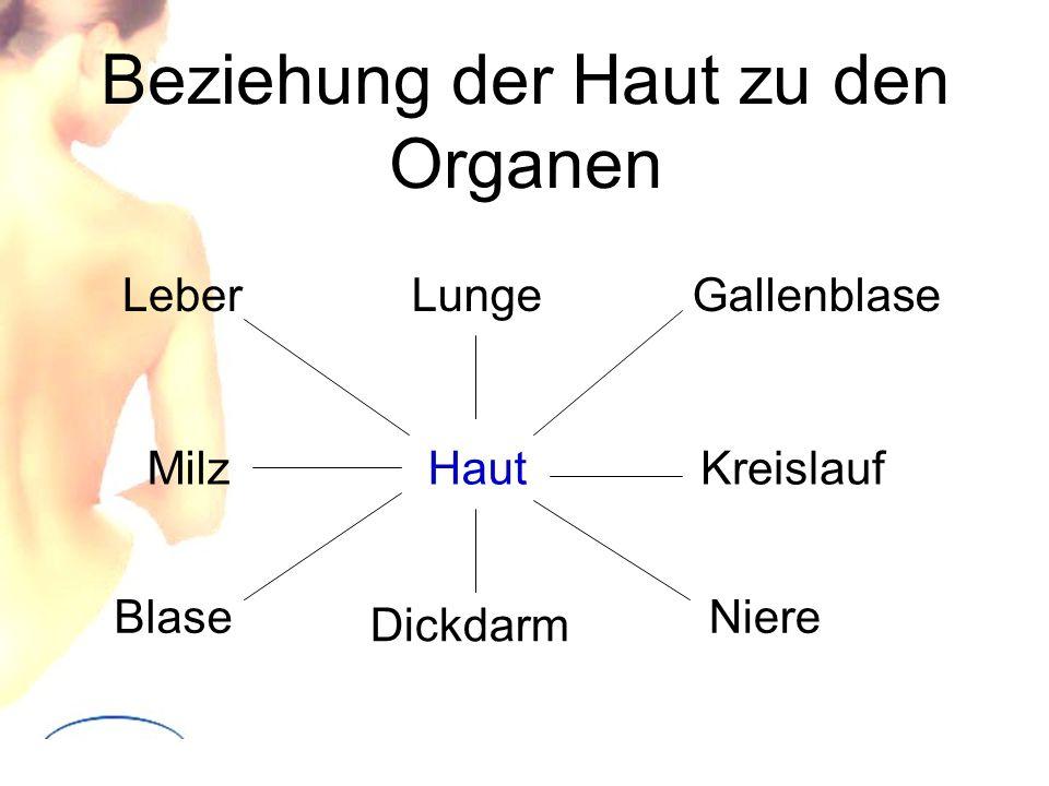 Beziehung der Haut zu den Organen