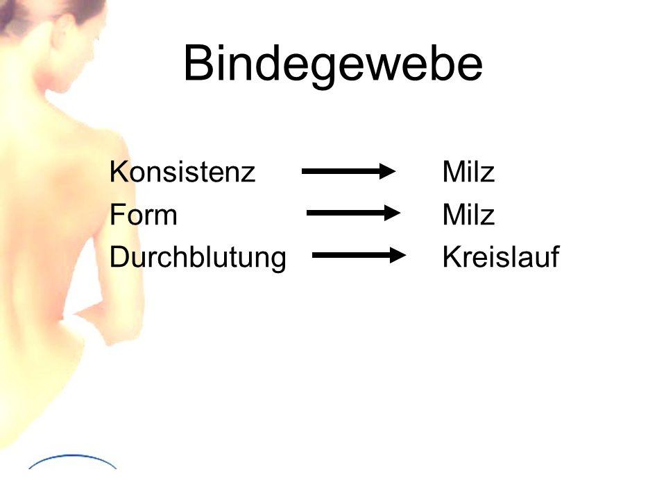 Bindegewebe Konsistenz Milz Form Milz Durchblutung Kreislauf