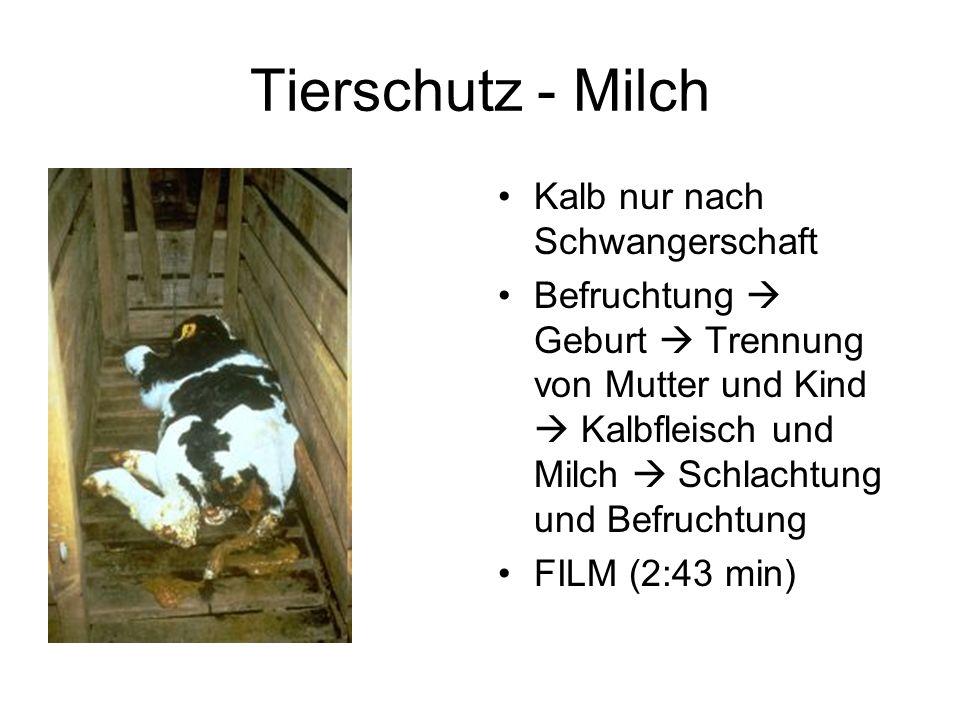 Tierschutz - Milch Kalb nur nach Schwangerschaft