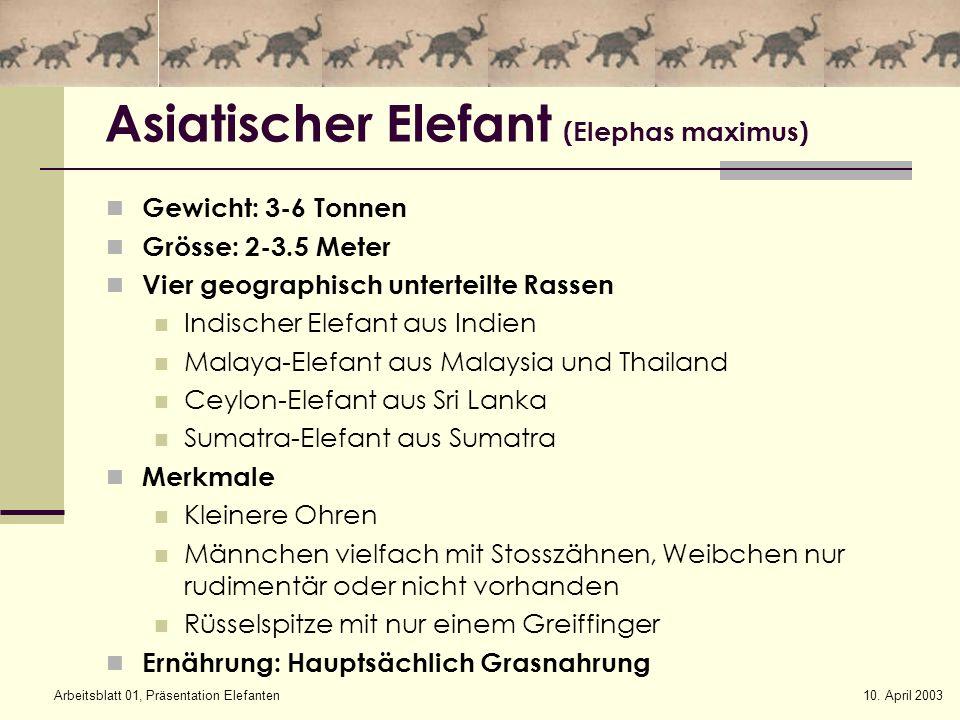 indischer elefant steckbrief