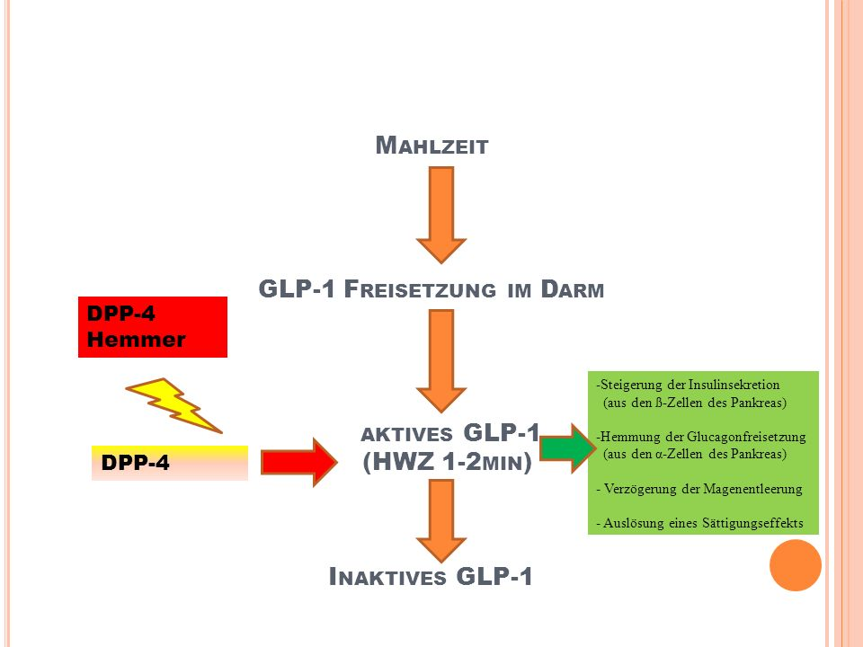 Mahlzeit GLP-1 Freisetzung im Darm aktives GLP-1 (HWZ 1-2min) Inaktives GLP-1