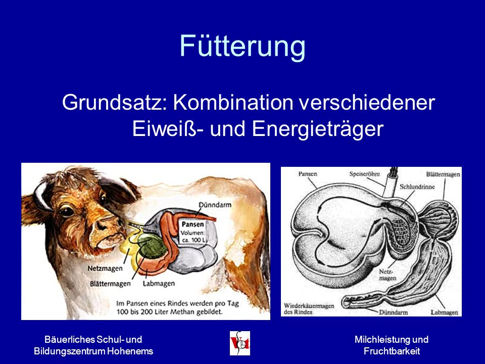 Fütterung Grundsatz: Kombination verschiedener Eiweiß- und Energieträger. Bäuerliches Schul- und Bildungszentrum Hohenems.