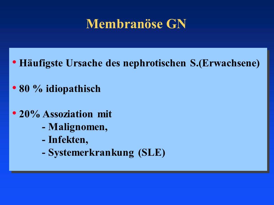 Membranöse GN Häufigste Ursache des nephrotischen S.(Erwachsene)