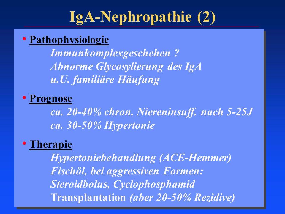 IgA-Nephropathie (2) Pathophysiologie Immunkomplexgeschehen