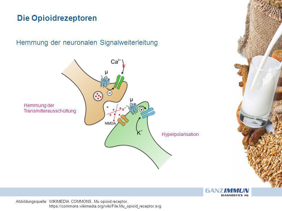 Die Opioidrezeptoren Hemmung der neuronalen Signalweiterleitung