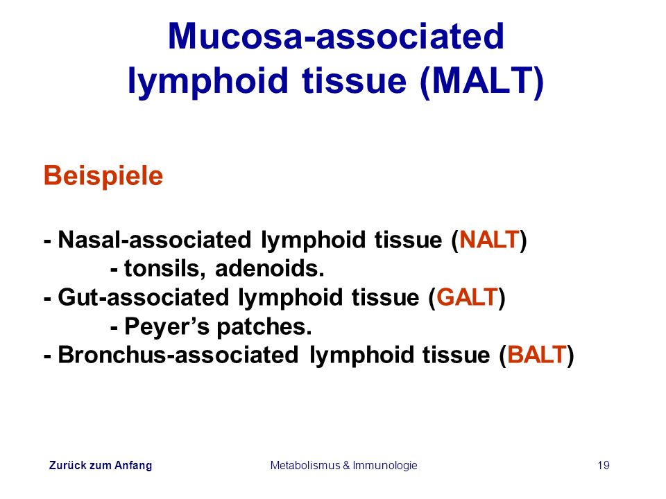 Mucosa-associated lymphoid tissue (MALT)