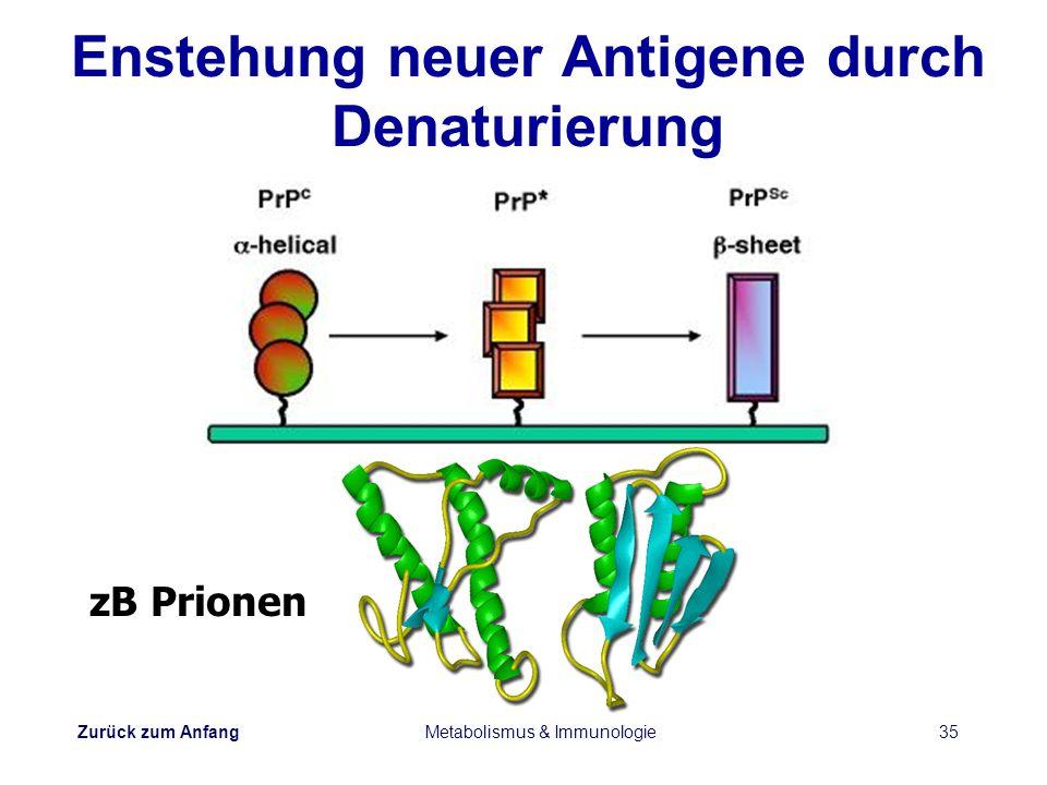 Enstehung neuer Antigene durch Denaturierung