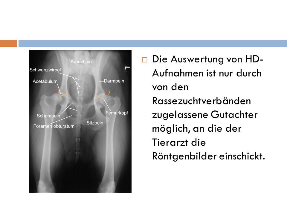 Die Auswertung von HD- Aufnahmen ist nur durch von den Rassezuchtverbänden zugelassene Gutachter möglich, an die der Tierarzt die Röntgenbilder einschickt.