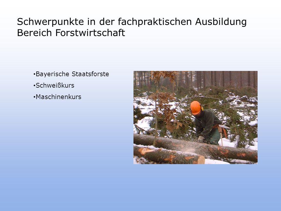 Schwerpunkte in der fachpraktischen Ausbildung Bereich Forstwirtschaft